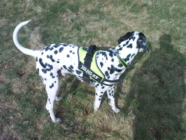 Julius K9 Guide Dog Harness